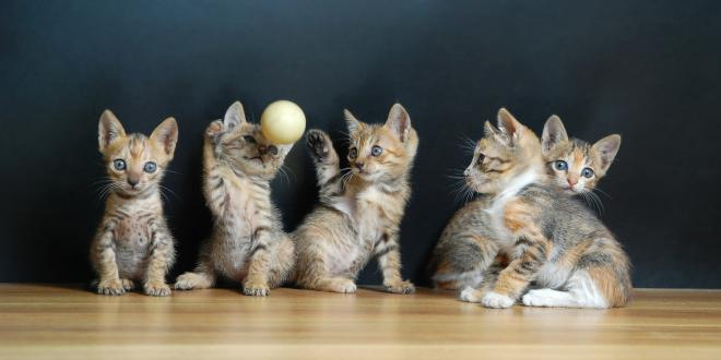 a litter of kittens playing with a ball